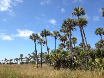Hickory Mound, St. Marks NWR, FL