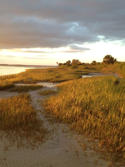 Salt Marsh Trails, St. Marks NWR, FL
