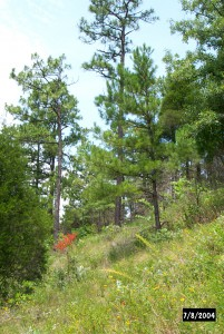 A scenic view of the Dolomite Glades